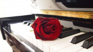 rose-671382_1920